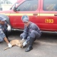 Bombeiros capturam animal